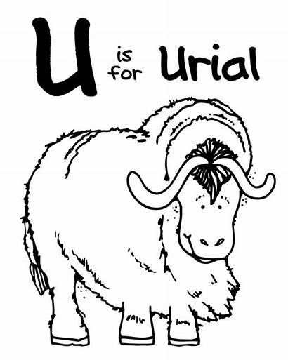 Coloring Animal Zoo Pages Letter Urial Animals