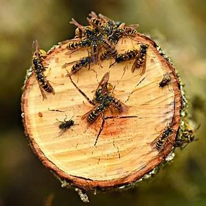 Wespennest Entfernen Vermieter : wespennest entfernen lassen beautiful heuer sind in salzburg etwas mehr wespen als sonst ~ Orissabook.com Haus und Dekorationen