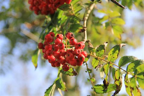 trees with berries in winter getting your garden ready for winter the turtle mat blog for news features and competitions