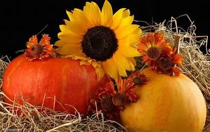 Pumpkin Autumn Sunflower