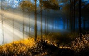 Nature, Landscape, Sun, Rays, Forest, Path, Sunrise, Trees, Sunlight, Grass, Mist, Wallpapers, Hd