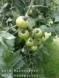 Tomaten Wann Pflanzen : mein waldgarten wann werden die tomaten endlich rot ~ Frokenaadalensverden.com Haus und Dekorationen