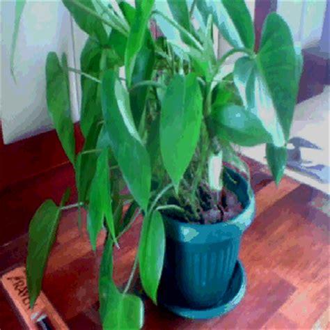 sewa tanaman rental tanaman indoor plant rental tanaman