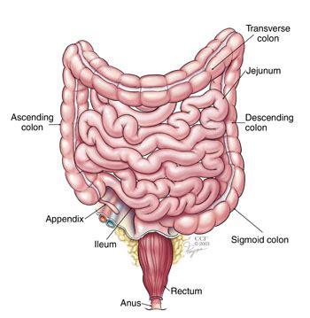 does aleve come in liquid form colonoscopy procedure colonoscopy instructions