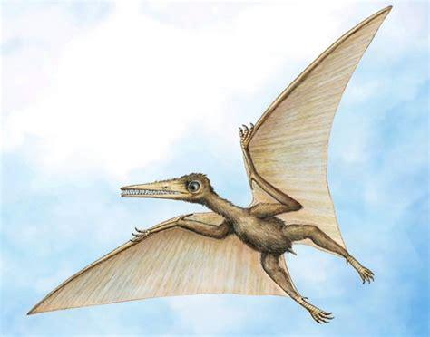 Dinosauro Volante Scoperto In Cina Il Pi 249 Antico Pterodattilo National