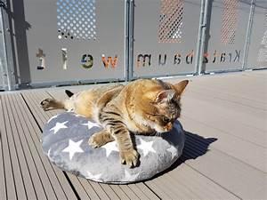 Sisalteppich Für Katzen : kissen f r katzen ~ Orissabook.com Haus und Dekorationen