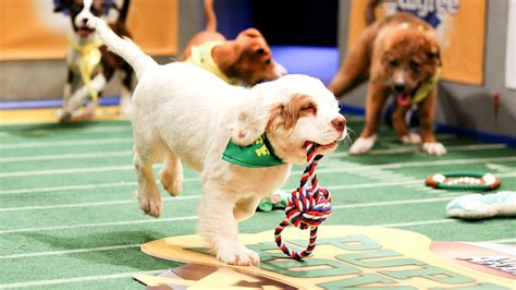 animal planets puppy bowl xi top dog  cable  sunday