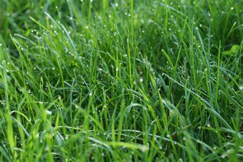 types of grasses the best grass to establish a lawn in richmond va lawnstarter