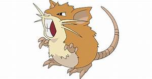 raticate images