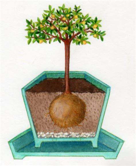 planter un arbre en pot arbres fruitiers pour petits jardins pratique fr