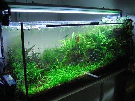 achat d un aquarium de plus de 200 litres aquariophilie org