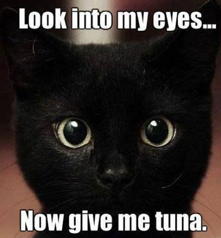 Beware Of Black Cats Plus Friday Frivolity Munofore