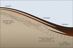 Catena Soil Pattern  U2013 Soils  U2013 Te Ara Encyclopedia Of New