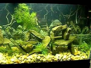 Fish Tank Background 55 Gallon South American Cichlid Tank Youtube