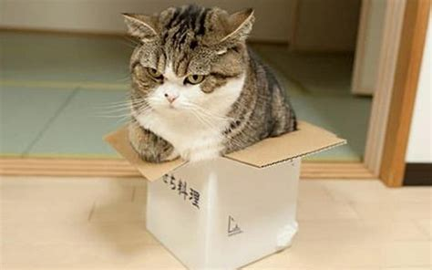 huge cats  small boxes top