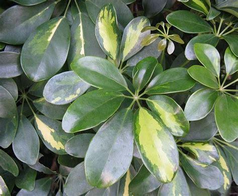 Le 5 Piante Tropicali Più Facili Da Coltivare In Casa