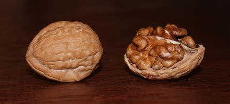 cuisines meaning ty ty nursery on the walnut tree ty ty nursery 39 s