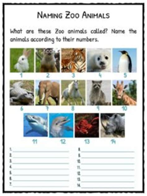 zoo facts worksheets  kids