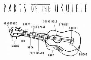 Parts Of The Ukulele  U2013 Kala Brand Music Co