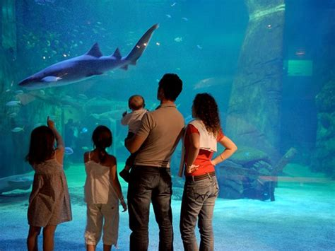 le seaquarium zoo aquarium requinarium port camargue 1er port de plaisance