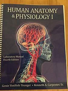 Human Anatomy  U0026 Physiology I Laboratory Manual