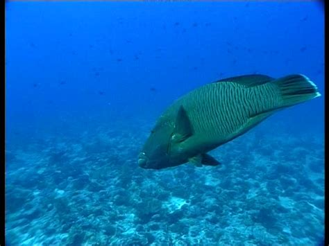 fish pacific ocean sd stock video footage collection
