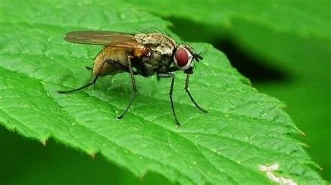 How To Get Rid Of House Flies « Housekeeping