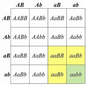 The gallery for --> Punnett Square Biology