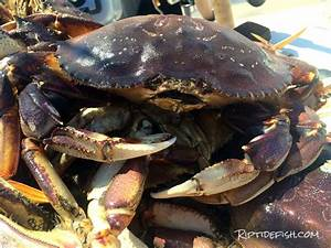 Rigging and Setup for Dungeness Crab - Riptidefish