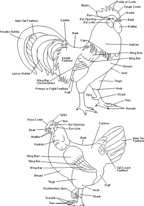image detail for diagram chart layout site chicken cuts