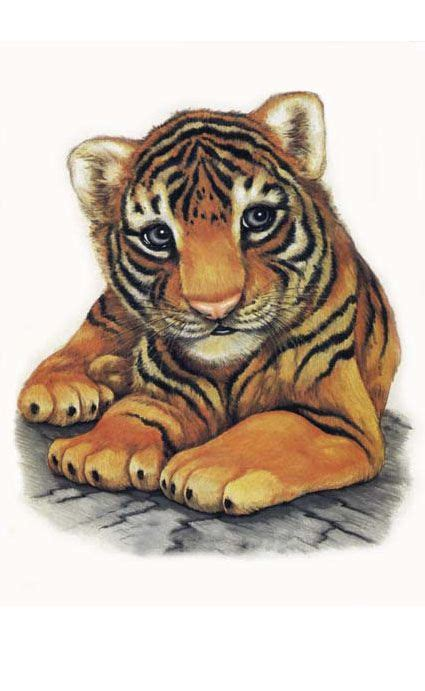 baby animal drawings ideas  pinterest draw