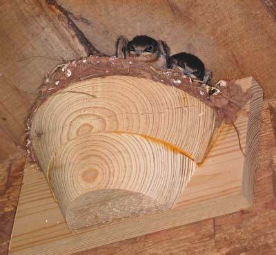 artificial nest cups  owls barn swallows id love