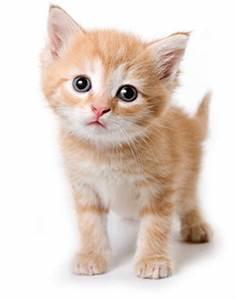 Mit Katze Umziehen : katzenzubeh r online shop zubeh r f r katzen online ~ Michelbontemps.com Haus und Dekorationen