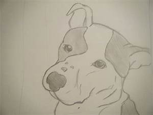 Pencil Pitbull by BengalFanatic on DeviantArt