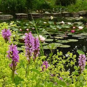 Wasserpflanzen Teich Kaufen : wasserpflanzen im gartenteich produkte ~ Michelbontemps.com Haus und Dekorationen