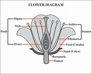 Tree Flowers Diagram