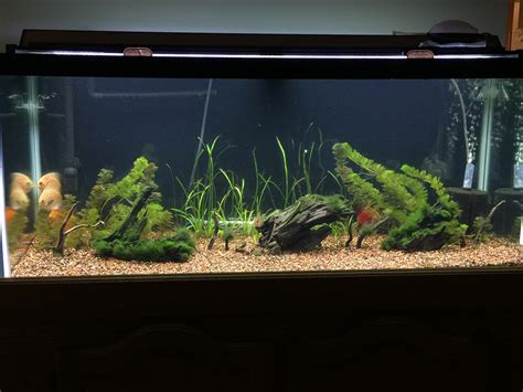 Aquascaping Tips by Aquascaping Tips Im Terrible The Planted Tank Forum