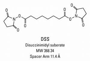 Dss  Disuccinimidyl Suberate