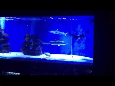 saltwater fish tank blacktip shark aquarium for home