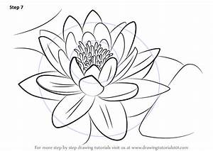 Learn How to Draw a Water Lily (Lily) Step by Step ...