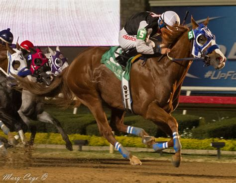 quarter horse racing night essay famous nation