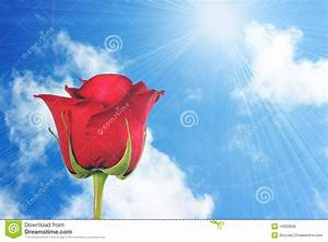 One Red Rose On Blue-sky Background Stock Photo - Image ...