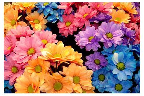 lindas flores imagens baixar gratis para celular