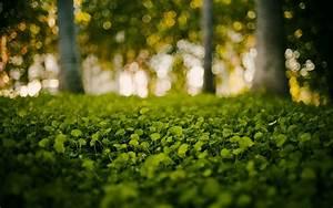 Forest, Wallpaper, Hd