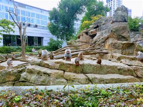 Zoologischer Garten Berlin Tripadvisor by Zoologischer Garten Berlin Zoo Kuva Berlin Zoological