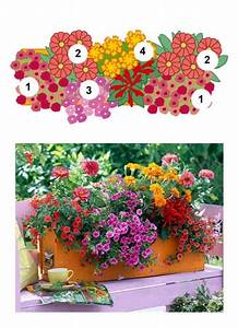 Blumenkästen Bepflanzen Sonnig : balkonblumen fantasievoll kombiniert garten pinterest balkon blumen garten und blumen ~ Frokenaadalensverden.com Haus und Dekorationen