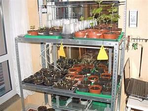Gartenregal Selber Bauen : pflanzenregal ein regal voller sch ner pflanzen und deko was w r das toll ars textura diy blog ~ Orissabook.com Haus und Dekorationen