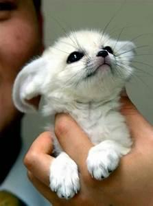 Baby arctic snow fox | Gods Beautiful Creations | Pinterest