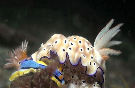 Amazing creatures of the deep ocean.