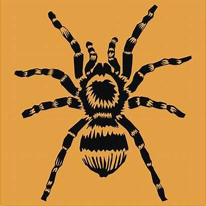 Tarantula Vector Clip Illustrations Spider Snake Royalty